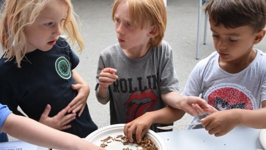 Høstfest med spiselige insekter på Nørre Fælled Skole