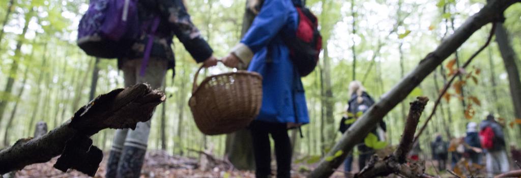 Børn i skoven